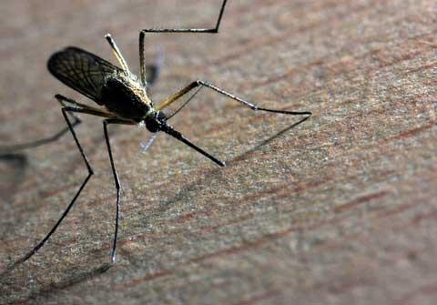 Savreux sanitation nos m tiers insectes - Punaise de lit transmission ...